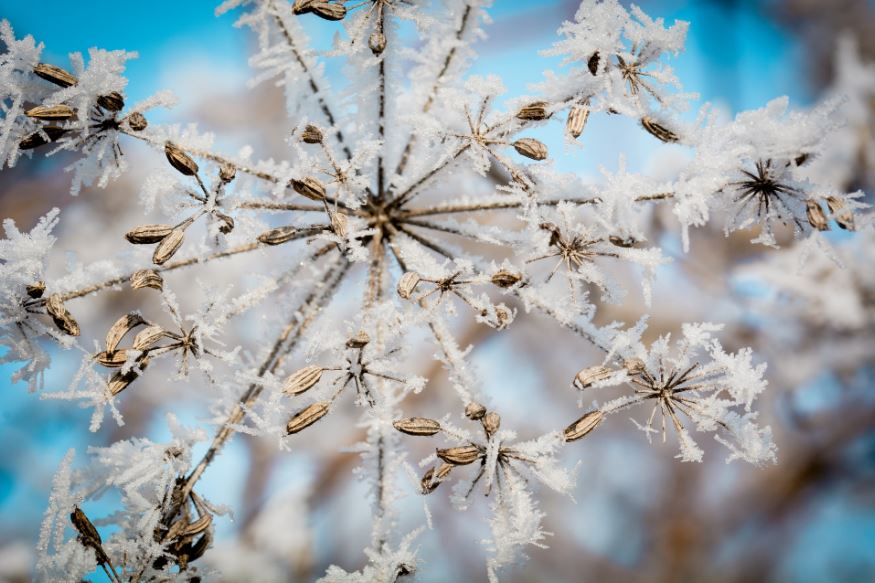 frost-uutta-vuotta-2017